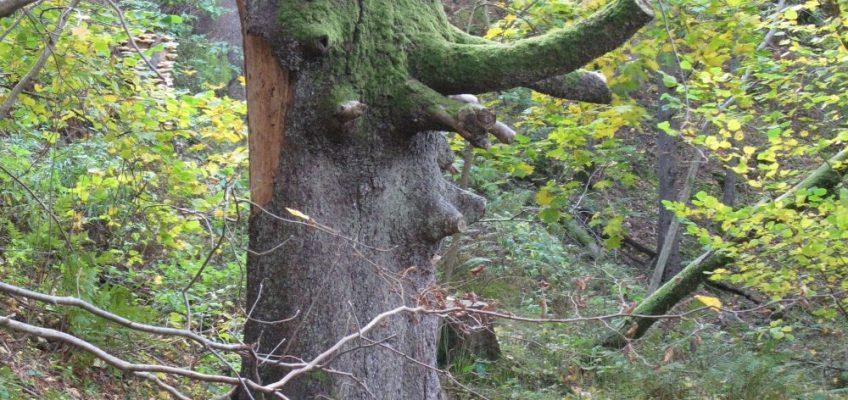 Om ett träd faller…